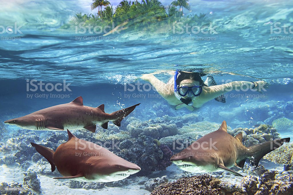 Woment at snorkeling with dangerous sharks stock photo