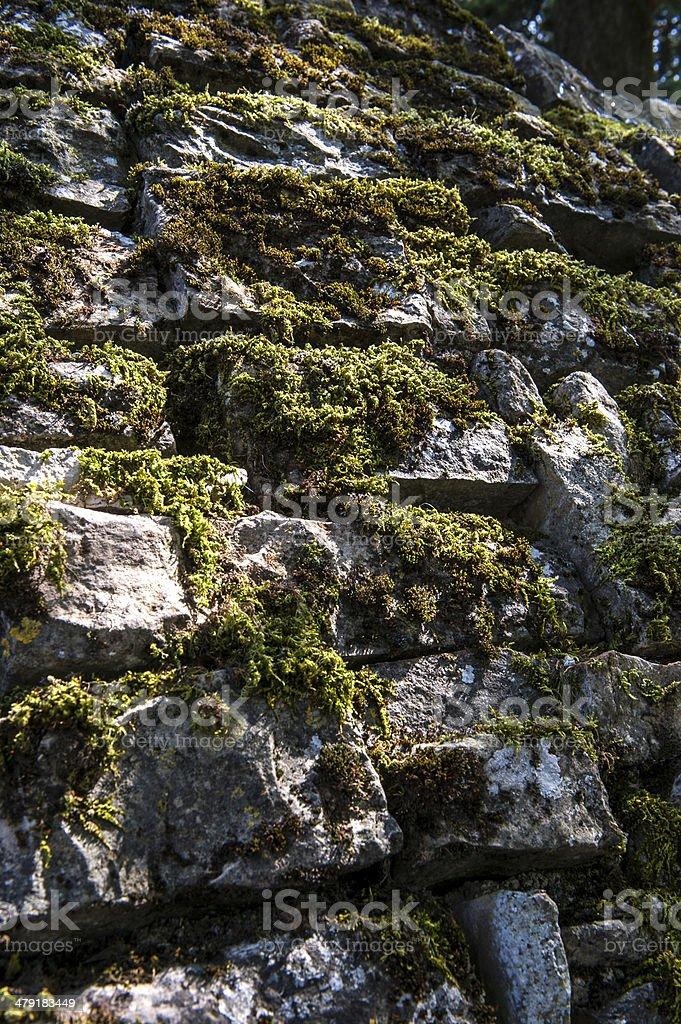 원더 벽면 moss 올드 스톤 royalty-free 스톡 사진