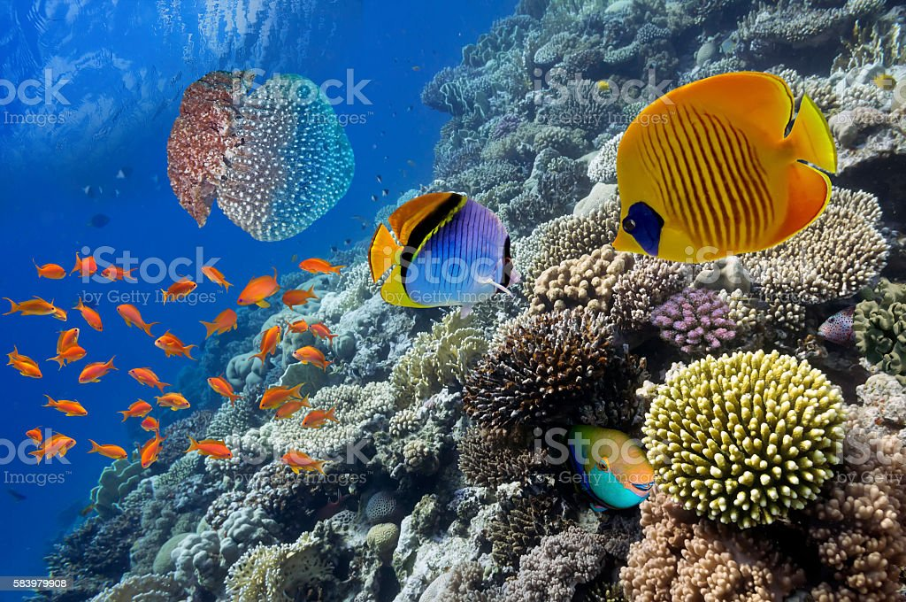 Wonderful and beautiful underwater world with corals and tropica stock photo