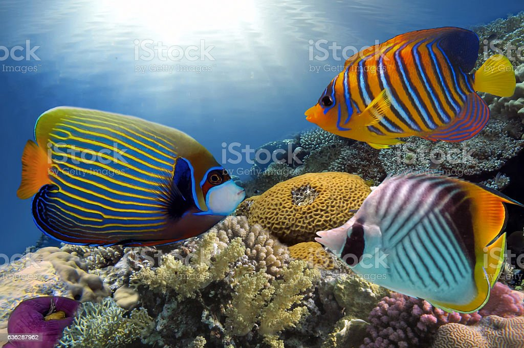 Wonderful and beautiful underwater world with corals stock photo