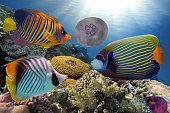 Wonderful and beautiful underwater world with corals