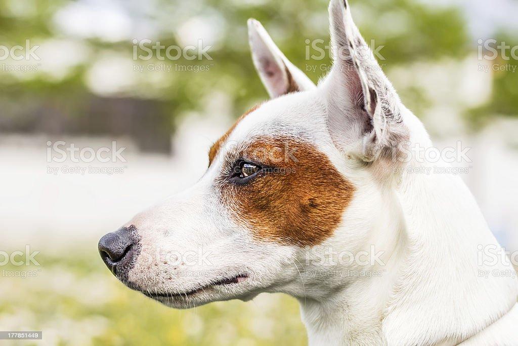 Wonderful dog royalty-free stock photo