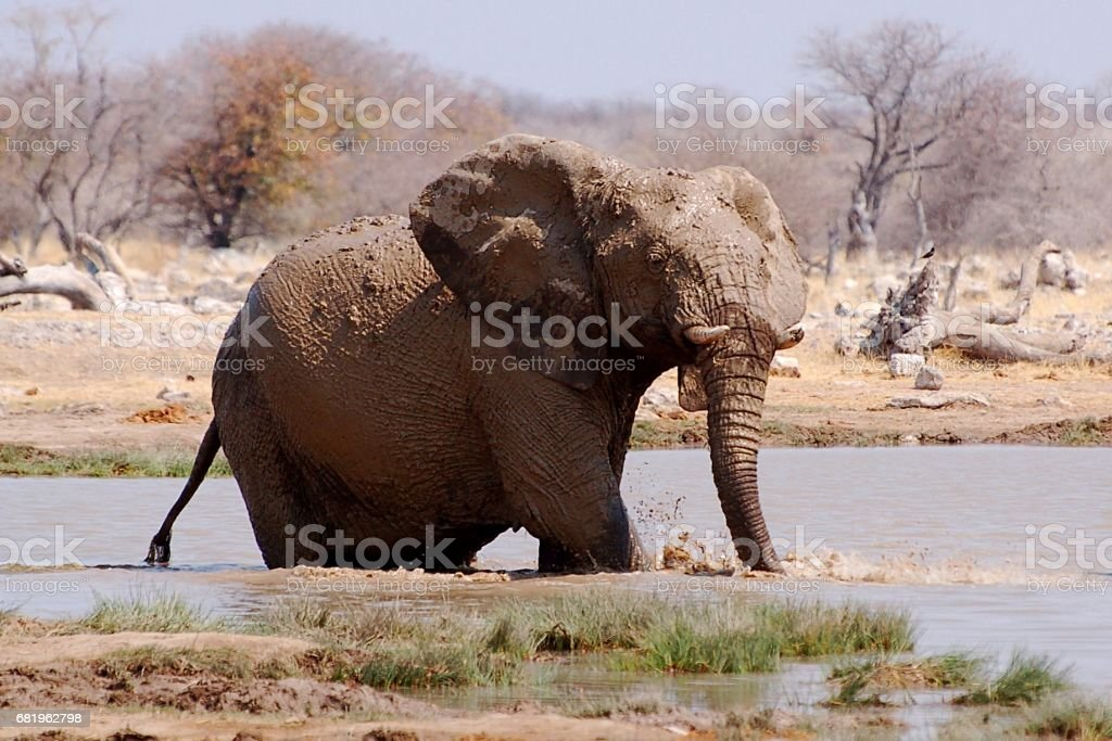 Wonderful Elephant in a waterhole in the Etosha National Park in Namibia stock photo