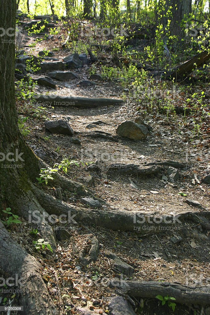 Wonderful footpath with wooden stairs royalty-free stock photo