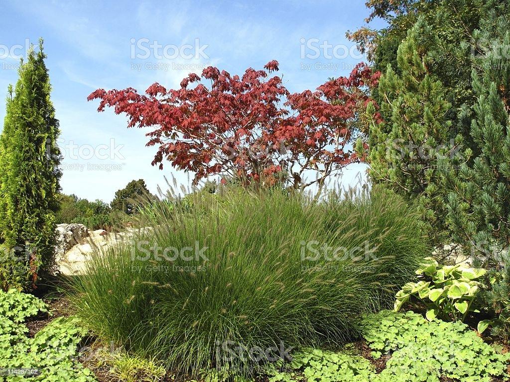 Wonderful garden royalty-free stock photo