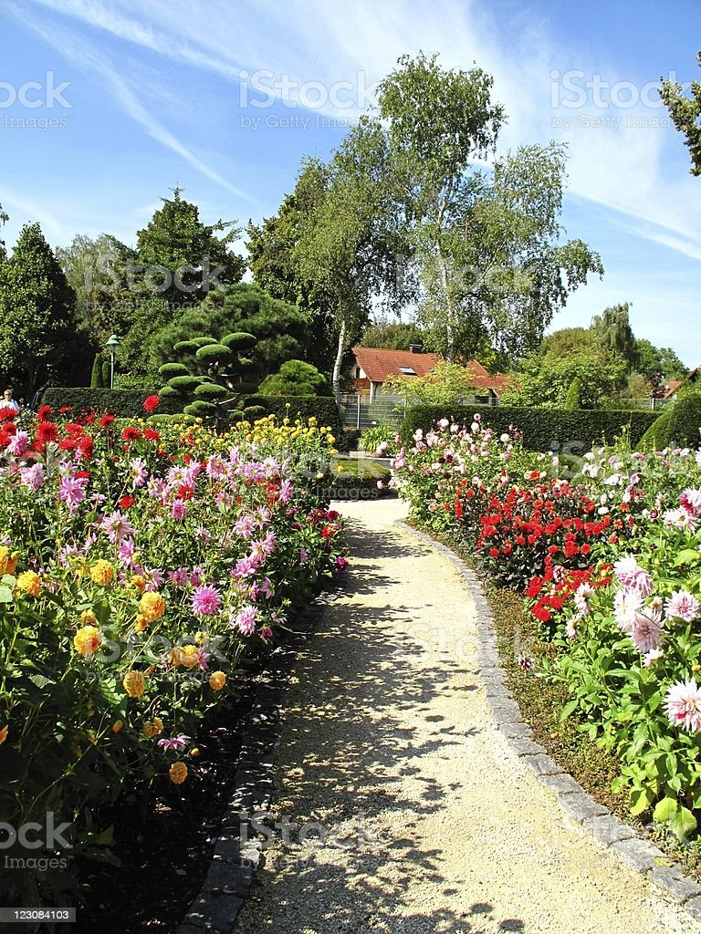 Wonderful garden with dahlias stock photo