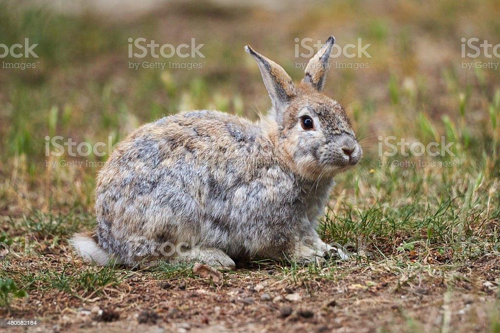 Wonderful grey brown Rabbit stock photo