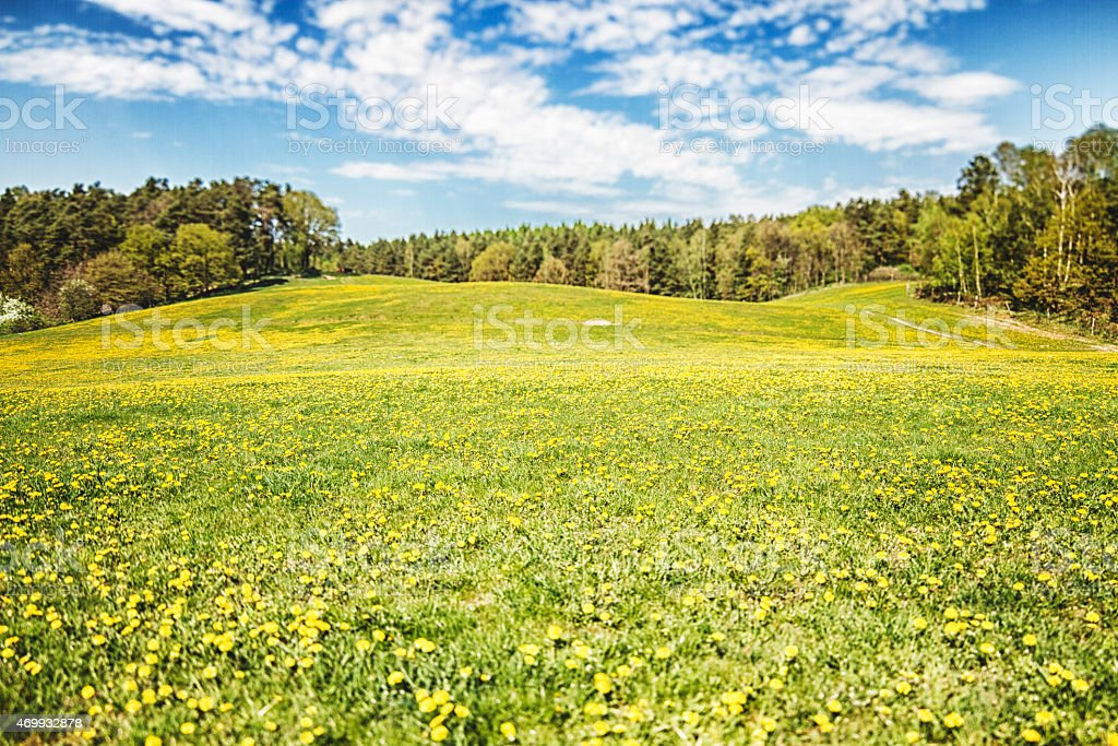 Wonderful landscape with buttercups in spring stock photo