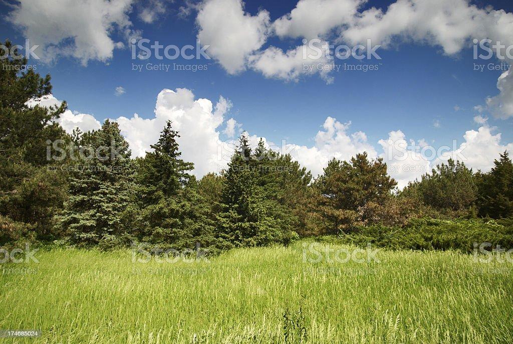 wonderland stock photo
