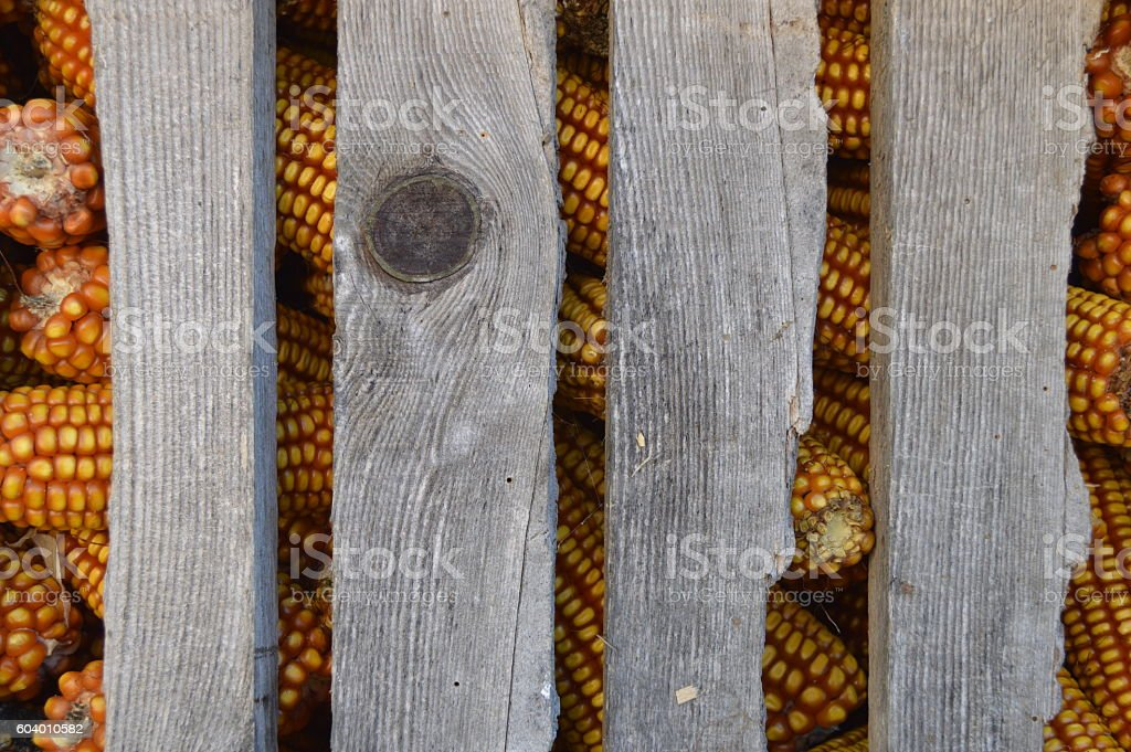 wood and corn stock photo