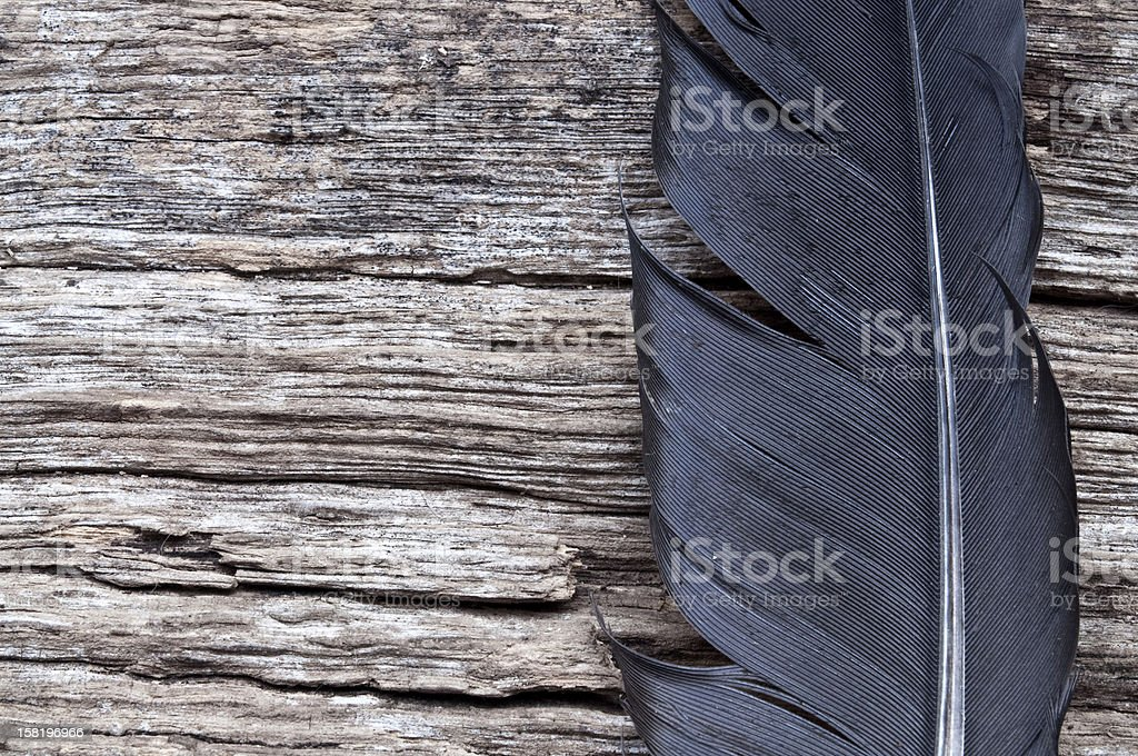 wood and feather stock photo