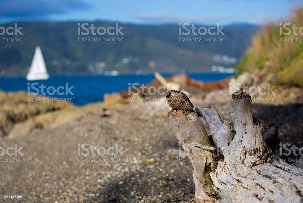 Wood And Rock On The Beach Near The Island stock photo
