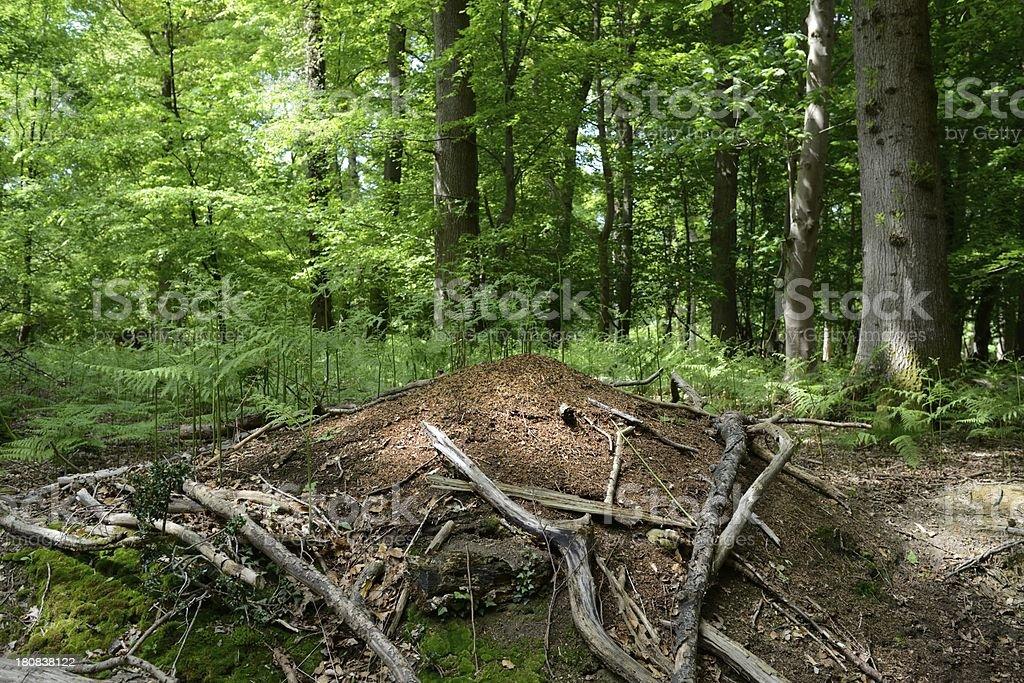 Wood Ant Nest royalty-free stock photo