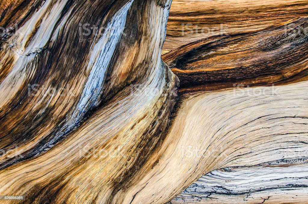 Wood art stock photo