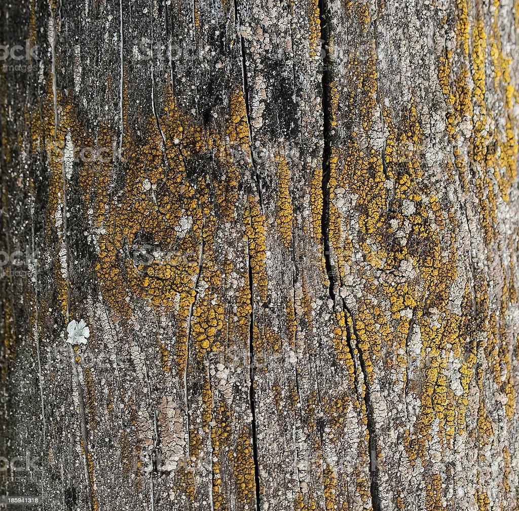 Wood Background, Close-up detail. royalty-free stock photo