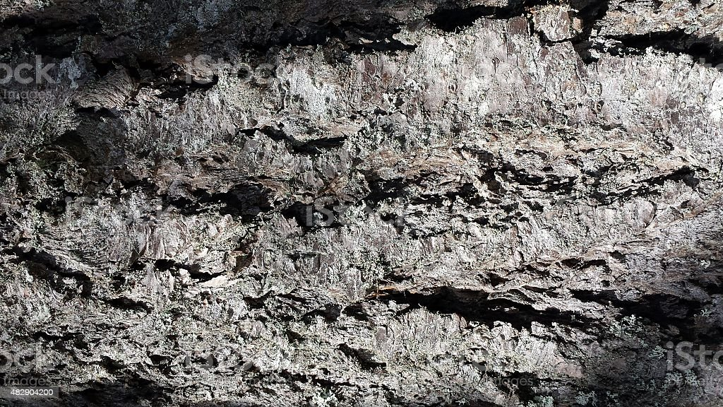 Wood bark closeup background stock photo