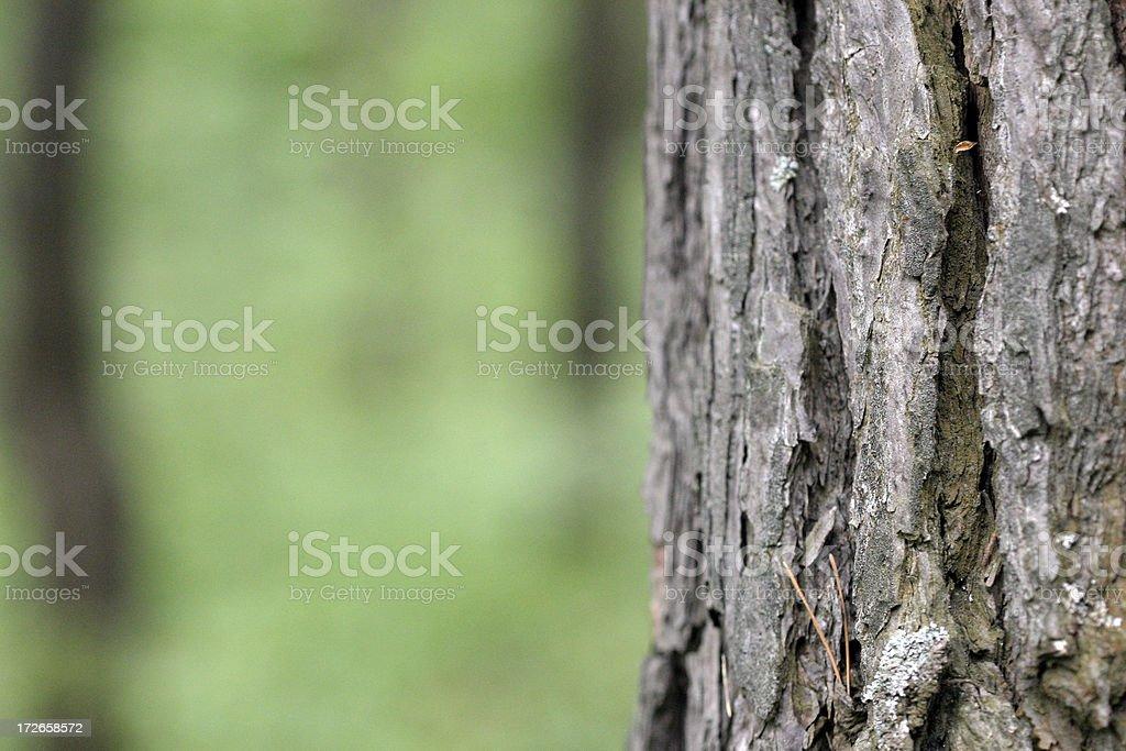 Wood bark royalty-free stock photo