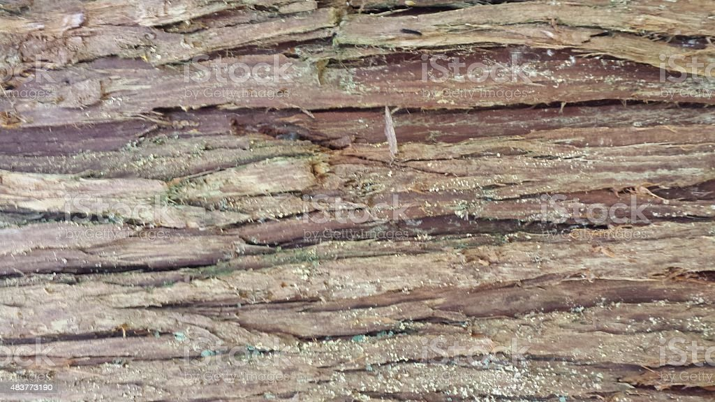 Wood bark stock photo