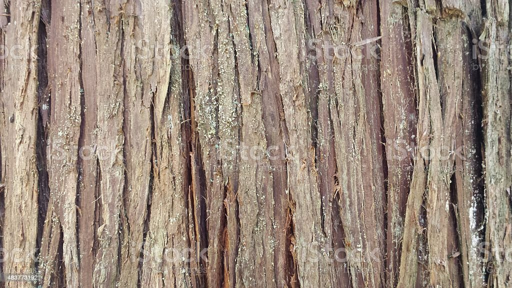 Wood bark wallpaper stock photo