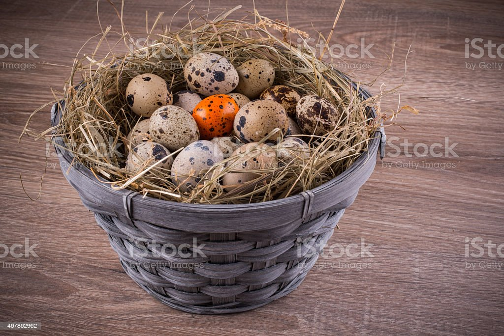 wood basket filled with eggs one orange egg of quails stock photo