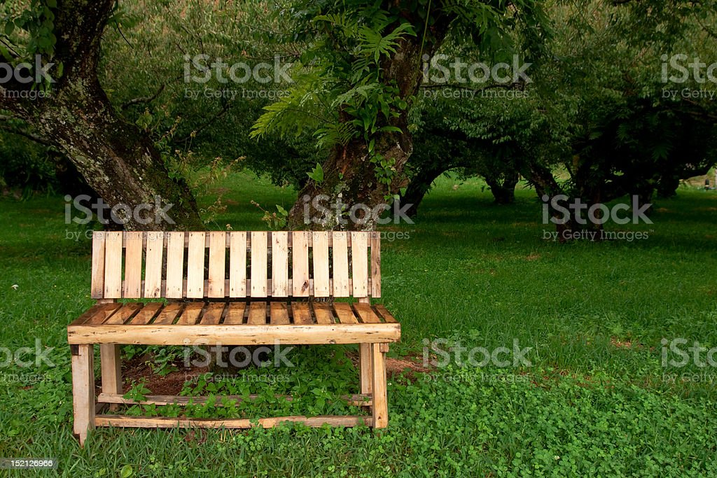 Wood bench in garden royalty-free stock photo