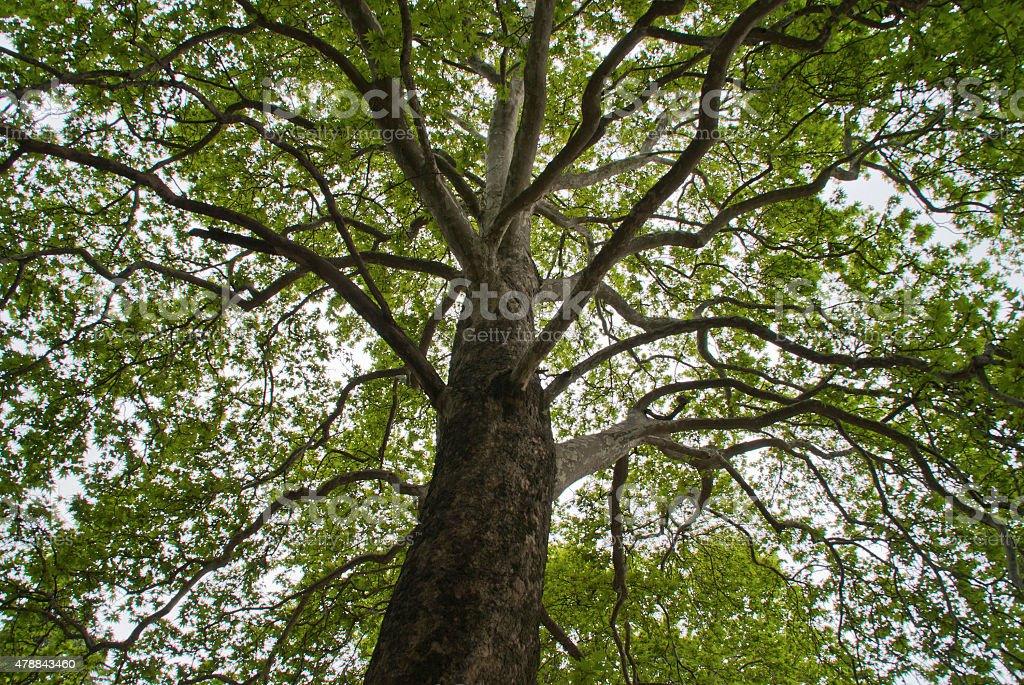 Wood bottom view stock photo