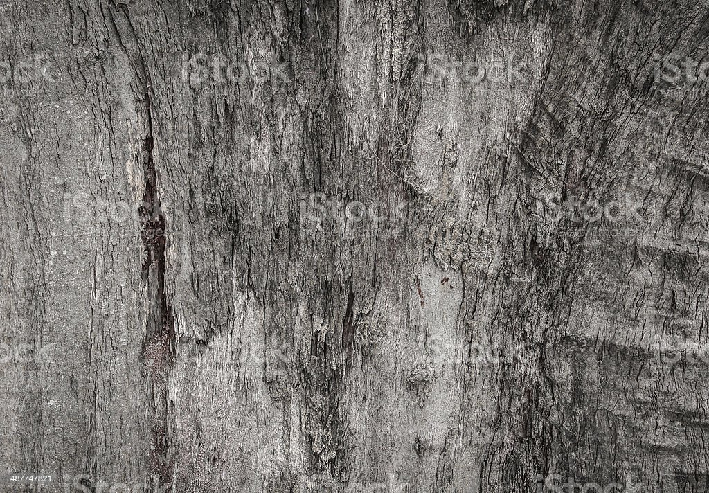 wood brackgrounds stock photo