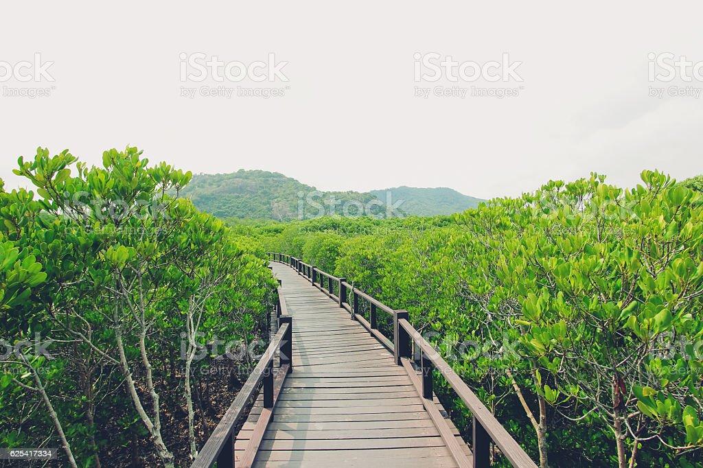 Wood bridge and mangrove forest in Pranburi, Prachuap Khiri Khan stock photo