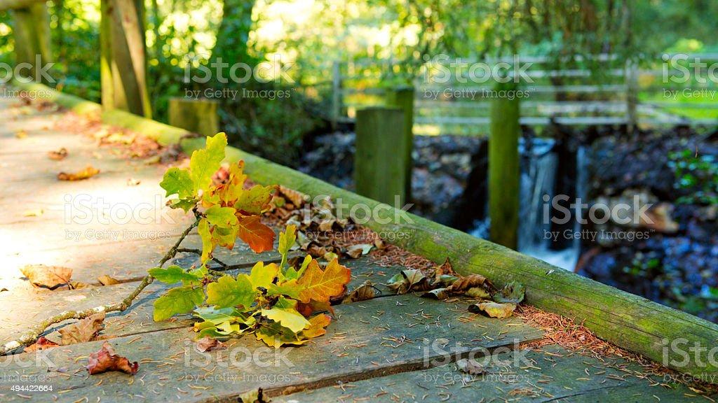 Wood bridge in autumn forest. stock photo