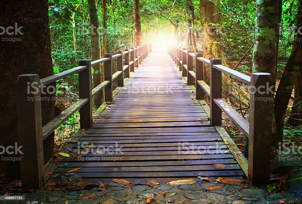 wood bridge in forest stock photo