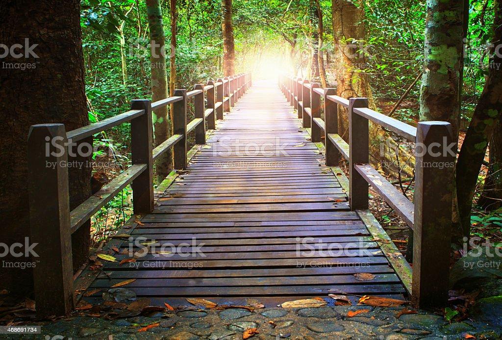 wood bridge in forest stock photo