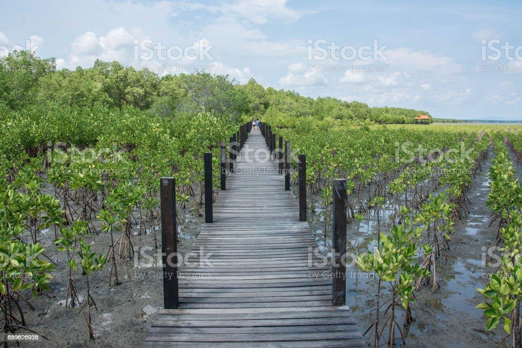 Wood bridge in mangrove the way study nature at thung prong thong ,Rayong , Thailand stock photo