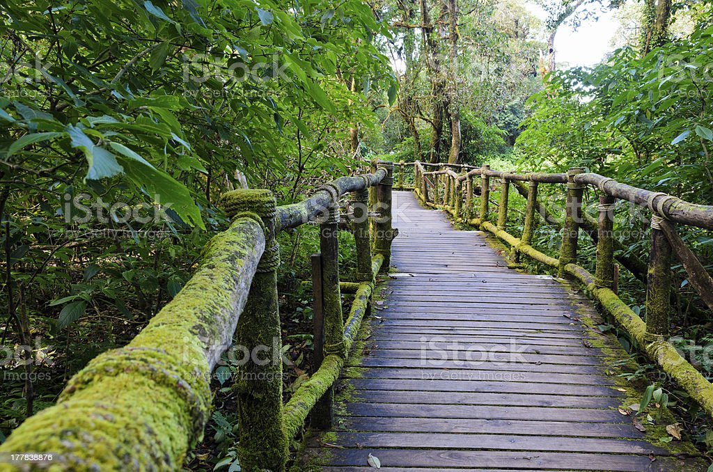 Wood bridge in the forest.. royalty-free stock photo
