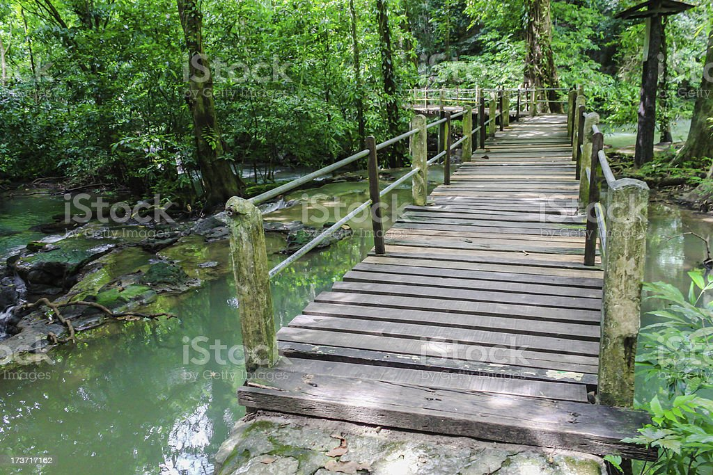 Wood bridge way into the forest royalty-free stock photo