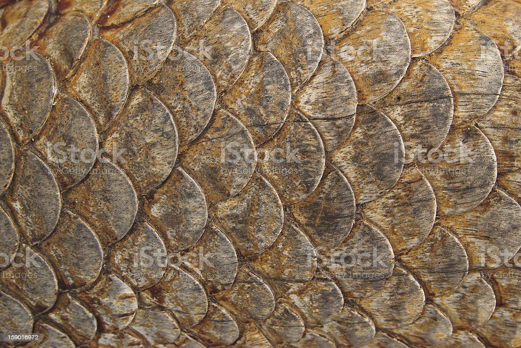 wood carving of a dragon at thailand royalty-free stock photo