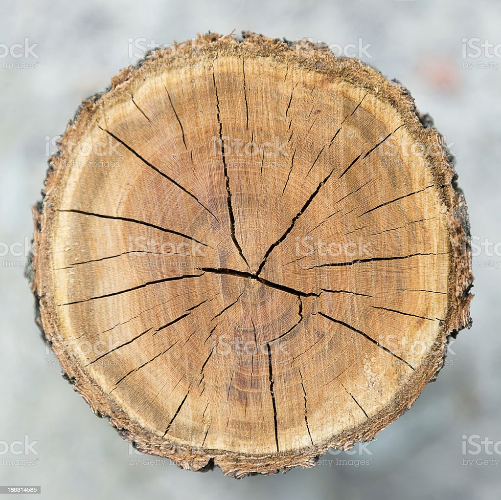 Wood circle texture stock photo