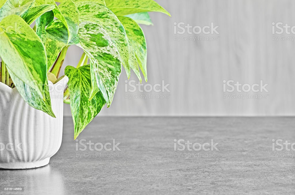 Wood copy space background with green plant stock photo