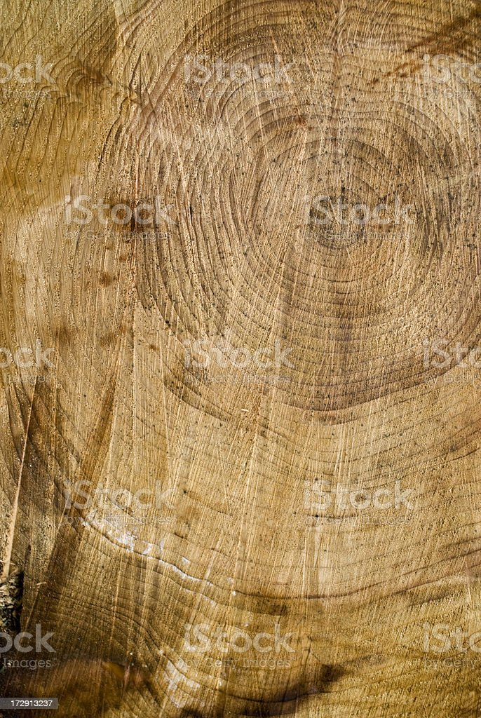 wood cross section stock photo