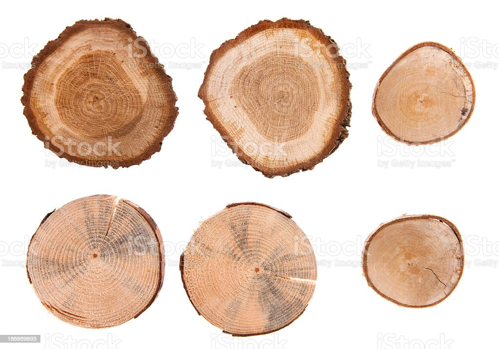 Wood cross sections in six pieces stock photo
