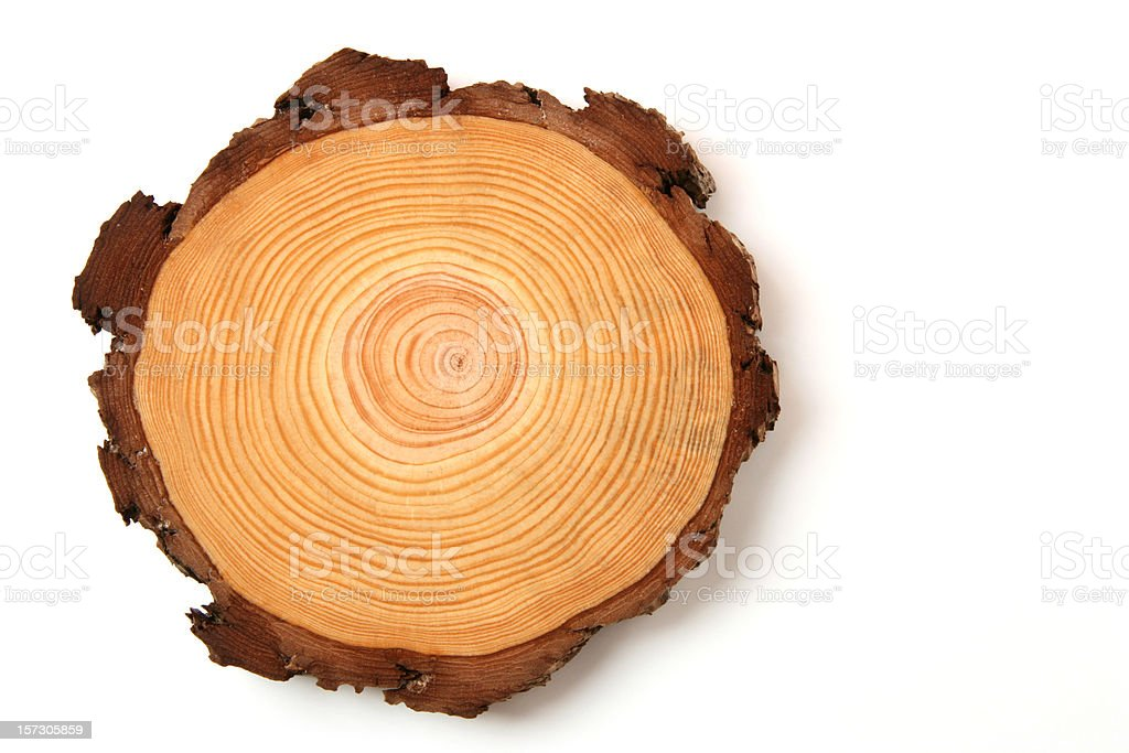 wood crossection stock photo