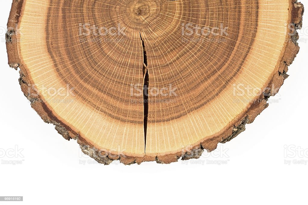 wood crossection royalty-free stock photo
