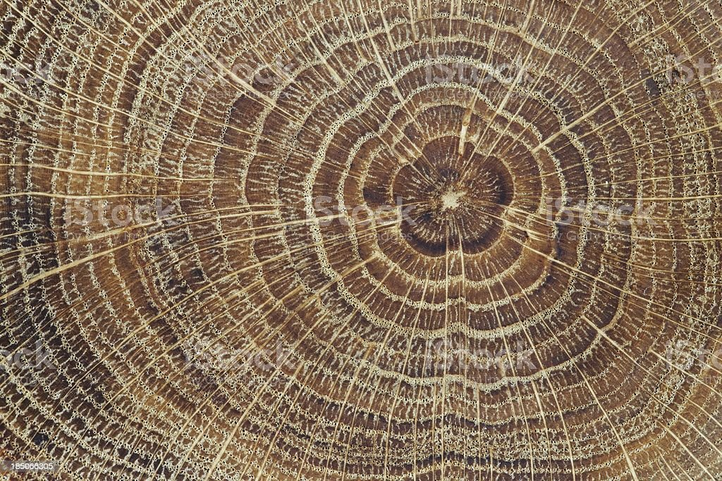 Wood cross-section background stock photo