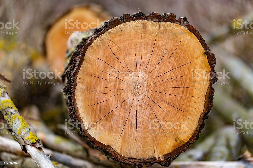 Wood cut stock photo