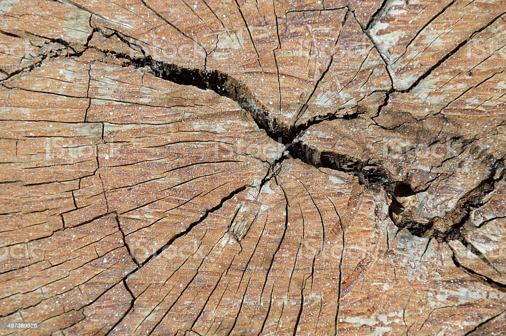 wood cut texture and background stock photo