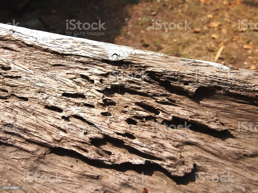 Wood damaged broken and after termite bite stock photo