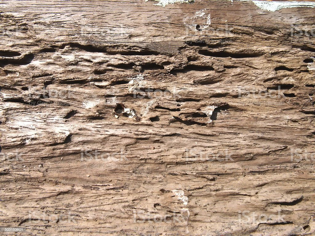 wood damaged from termite bite stock photo
