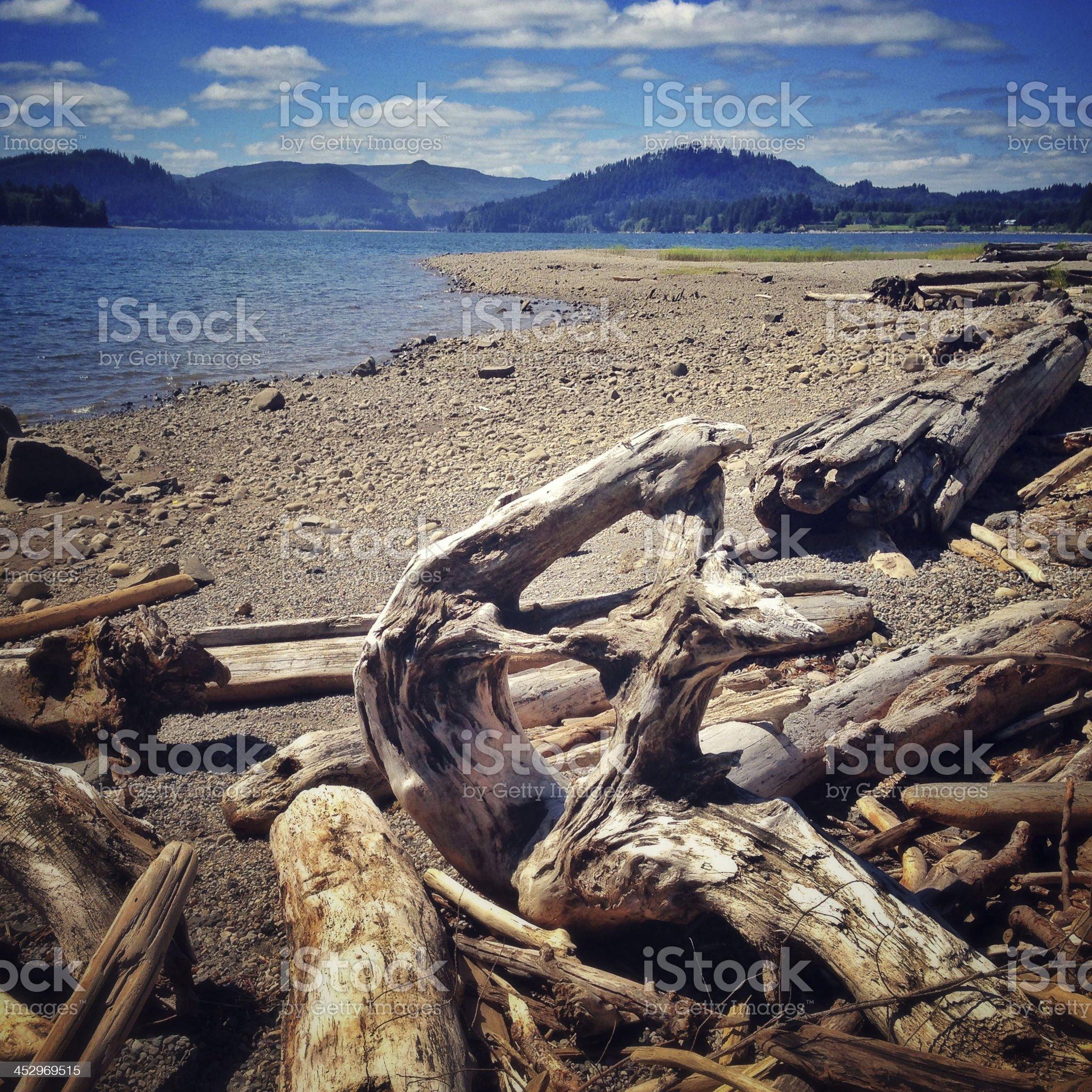 Wood debris on the lake shore royalty-free stock photo