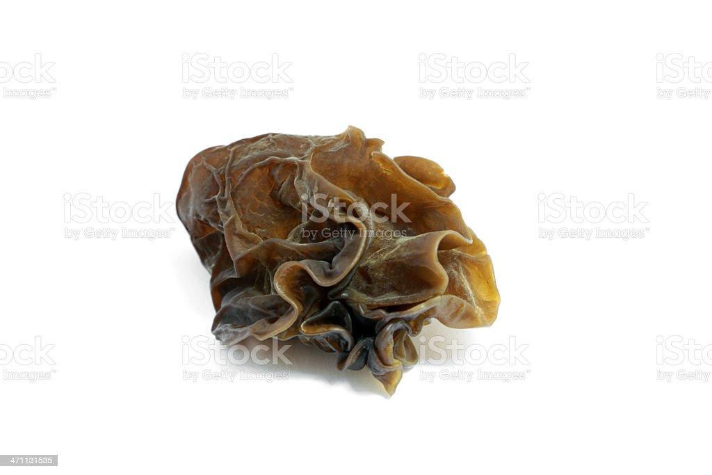 Wood Ear Mushroom stock photo