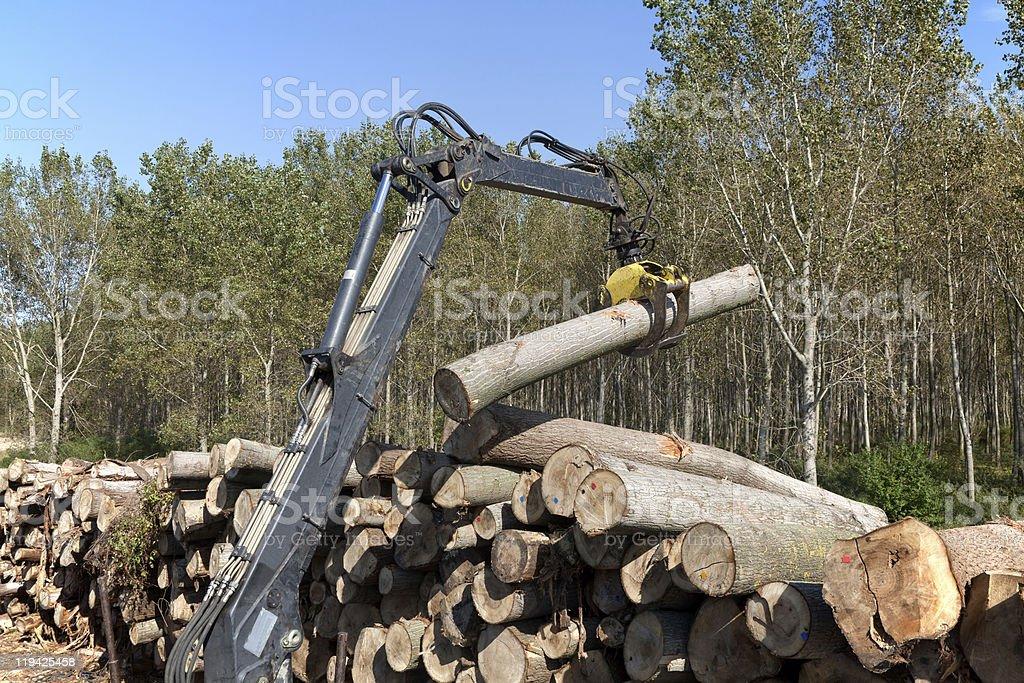 Wood exploiting royalty-free stock photo