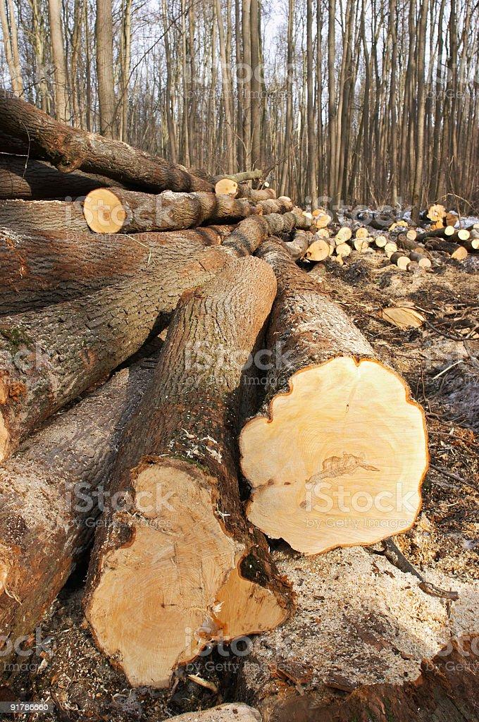 wood felling royalty-free stock photo